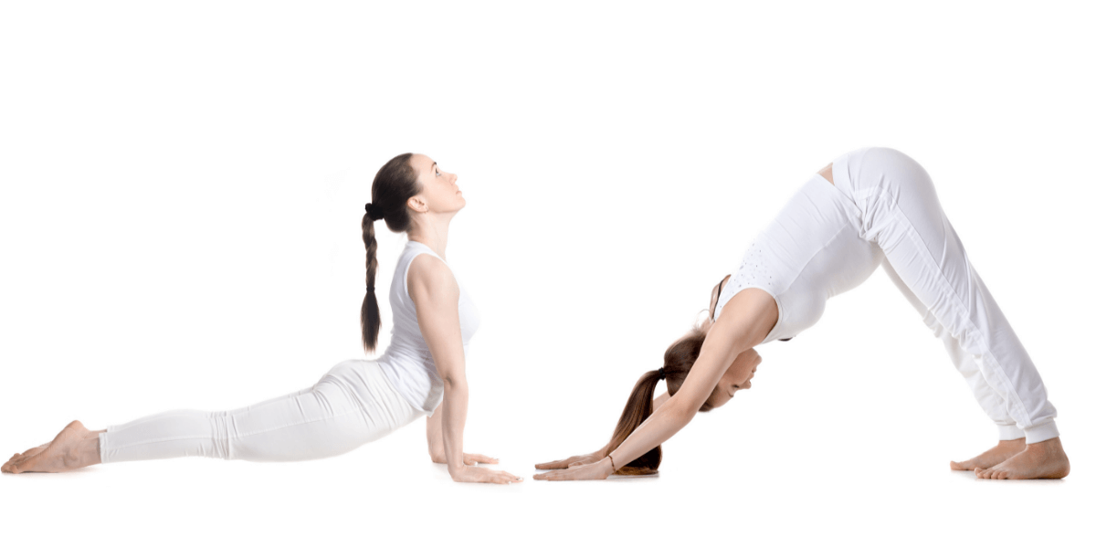 The up dog and down dog are the most popular poses in the yoga practice.